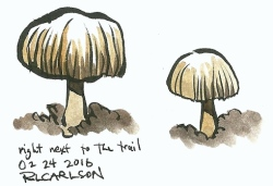 toadstools_2016feb24_sm