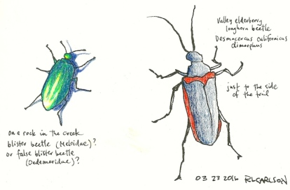 beetles_2016mar23_sm