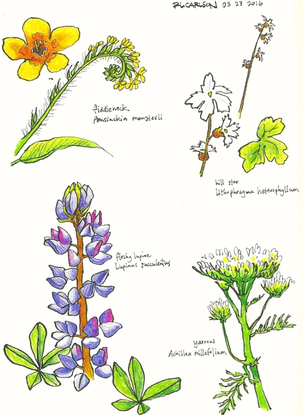 marchwildflowers1_2016mar23_sm