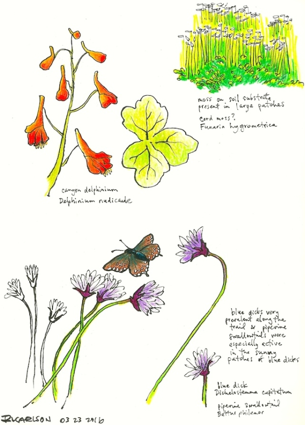 marchwildflowers3_2016mar23_sm