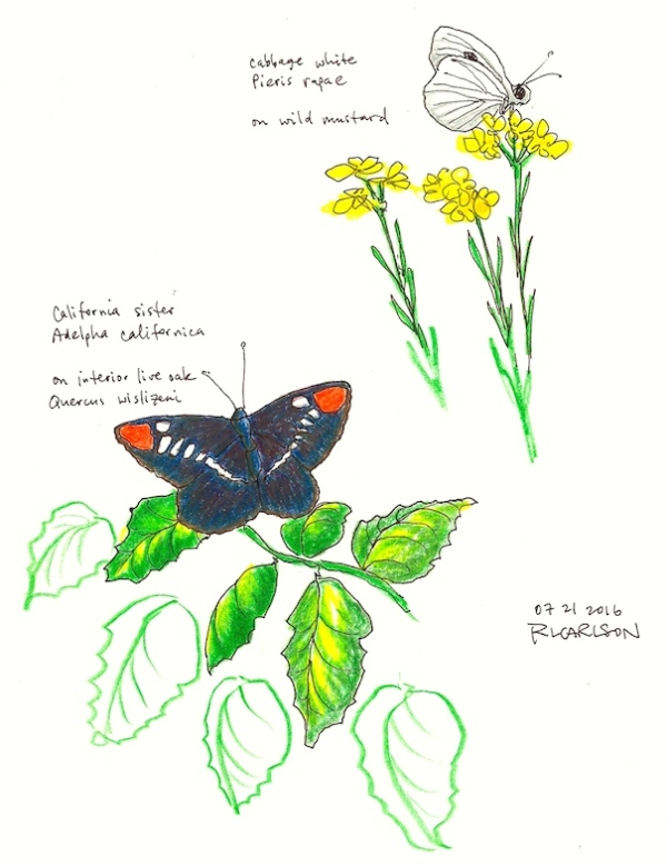 butterflies_2016jul21_sm