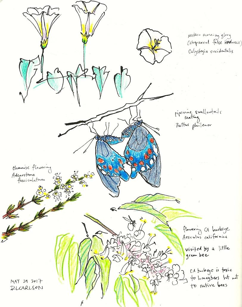 Wildflowers3_2017May29_sm