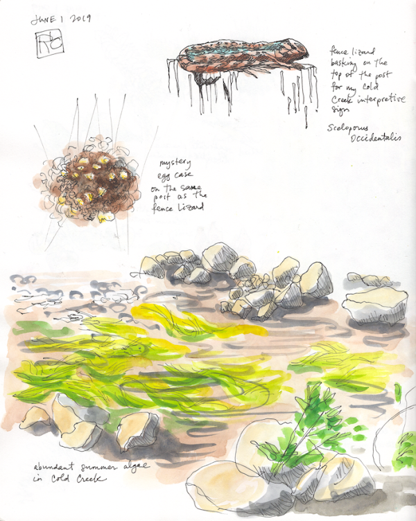 StebbinsSketchbook7_2019Jun01